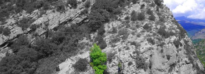 Vista aèria de l'entrada de la cova de les Llenes